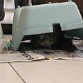 抓到貓一隻