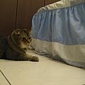 COLA:發現床擺有異狀~