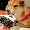 我的狗 006.jpg
