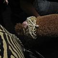 我的狗 022.jpg