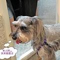 我的狗 018.jpg