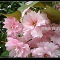 北海道》浪漫香氛‧北國櫻之雪》北海道002.jpg