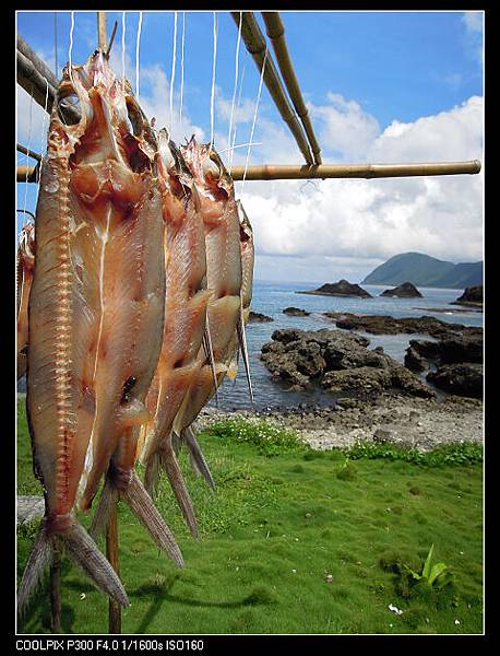 夏日海島-07-蘭嶼寧寧.jpg