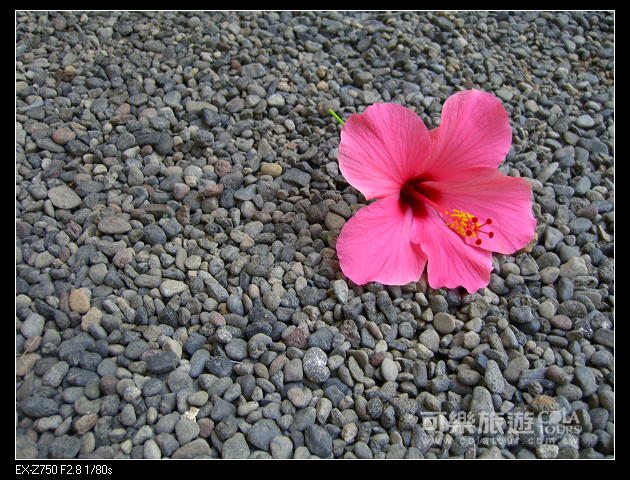 夏日海島-78-小乖-巴里島.jpg