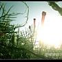 夏日海島-140-迺華-澎湖.jpg