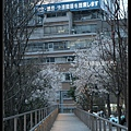 東京》放慢腳步賞櫻趣》克萊兒_DSCN6276.jpg