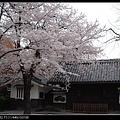 東京》放慢腳步賞櫻趣》克萊兒_DSCN6306.jpg