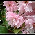 北海道》浪漫香氛‧北國櫻之雪》北海道003.jpg