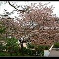 北海道》浪漫香氛‧北國櫻之雪》北海道001.jpg