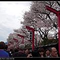 東京》放慢腳步賞櫻趣》克萊兒_DSCN6329.jpg