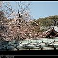 東京》放慢腳步賞櫻趣》克萊兒_DSCN6127.jpg