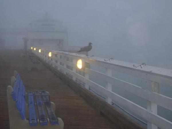 Malibu Inn Bird 3.JPG