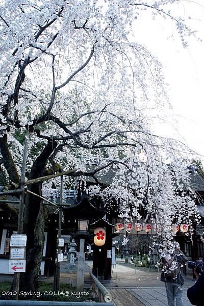 0406 平野神社-1