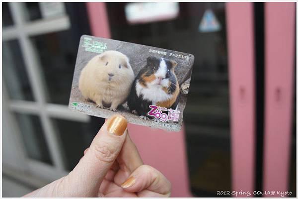 traffic card-003