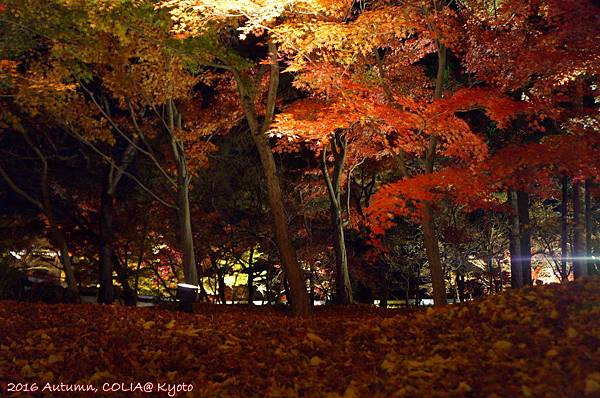 03-永觀堂(夜)-14.JPG