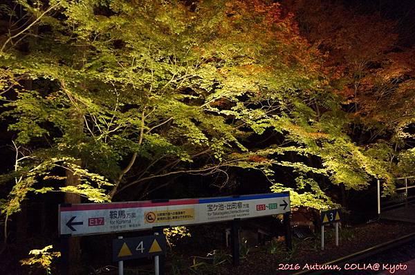 04-叡電紅葉隧道 01.JPG