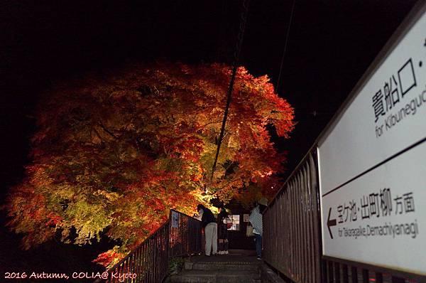 04-叡電紅葉隧道 06.JPG