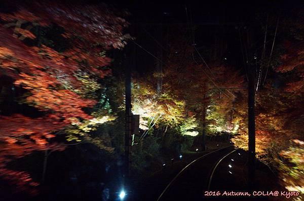 04-叡電紅葉隧道 03.JPG