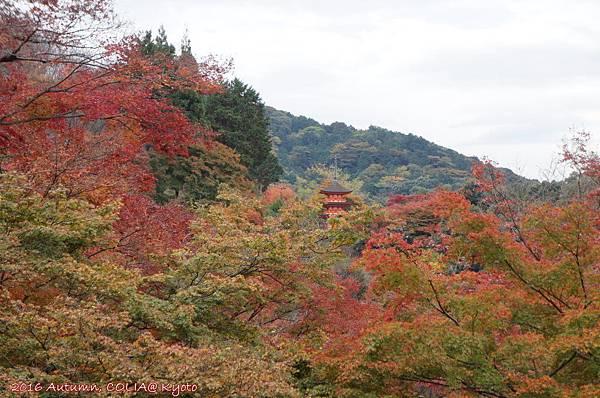 19-清水寺 02.JPG
