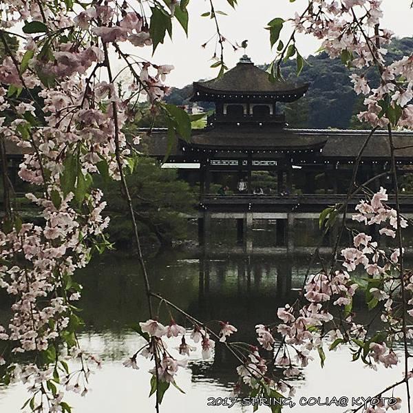 170420-平安神宮神苑.JPG
