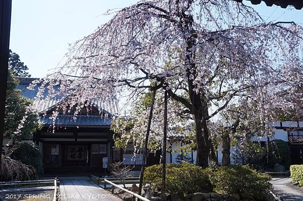 170402-上品蓮臺寺.JPG