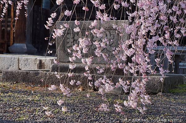 170402-立本寺.JPG