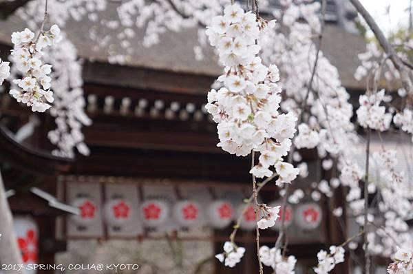170403-平野神社-2.JPG