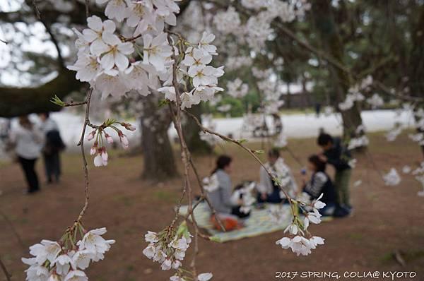 170405-京都御苑-1.JPG