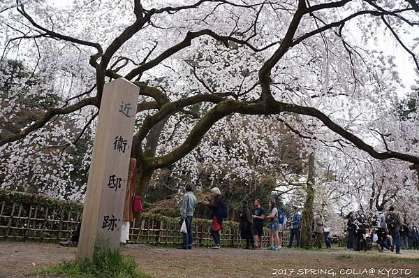 170405-京都御苑-3.JPG