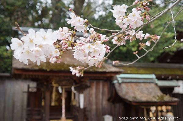 170405-宗像神社(御苑)-2.JPG
