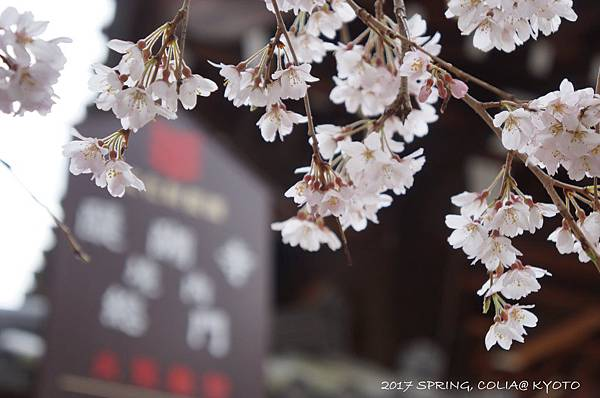 170406-醍醐寺-1.JPG