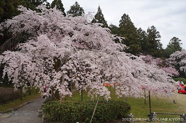 170406-醍醐寺-4.JPG