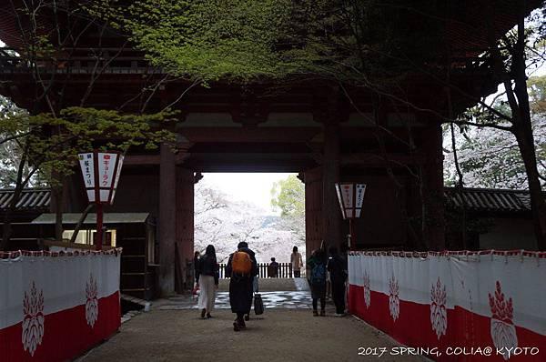170406-醍醐寺-9.JPG