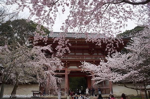 170406-醍醐寺-6.JPG