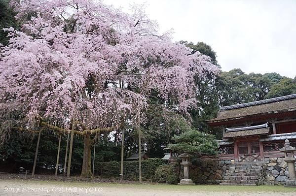 170406-醍醐寺-7.JPG