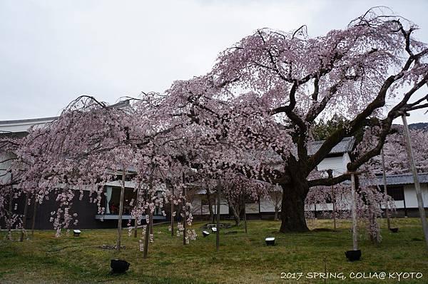 170406-醍醐寺-11.JPG