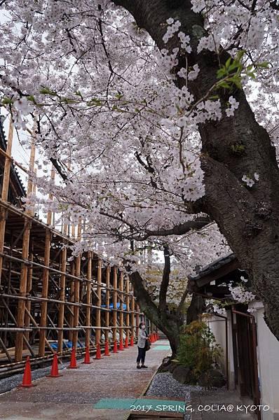 170409-本隆寺.JPG
