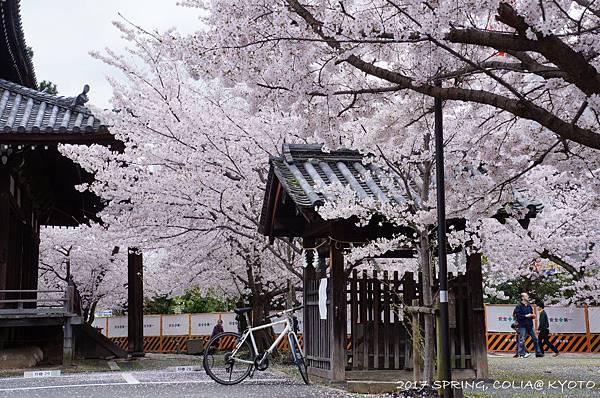 170409-立本寺-1.JPG