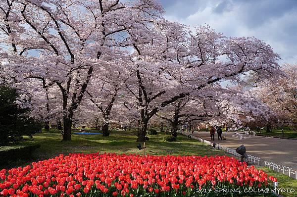 170412-京都植物園-2.JPG