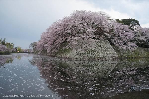 170415-彥根城-2.JPG
