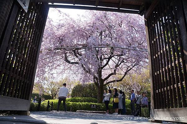 170414-妙心寺退藏院.JPG