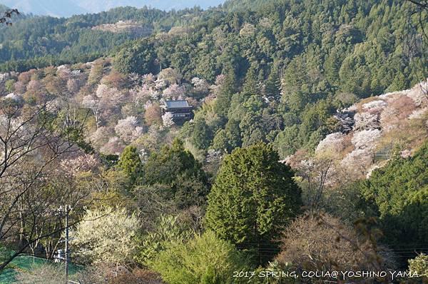 170416-吉野山-2.JPG