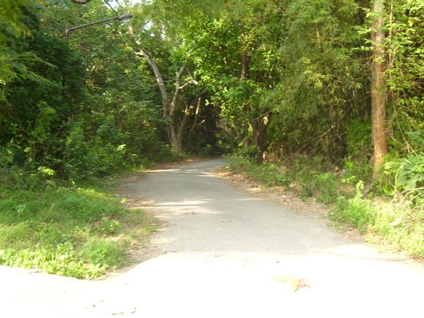 通往清大土地公的小路
