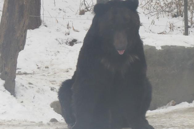 超像招財貓的黑熊