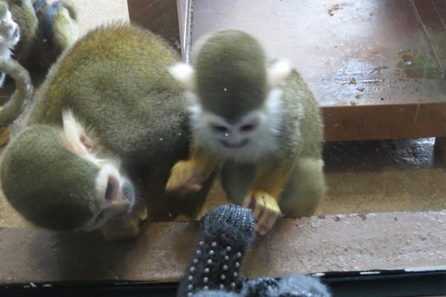 超調皮一直想玩我手指的猴子
