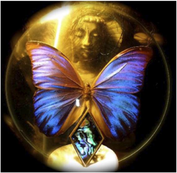 butterfly journey