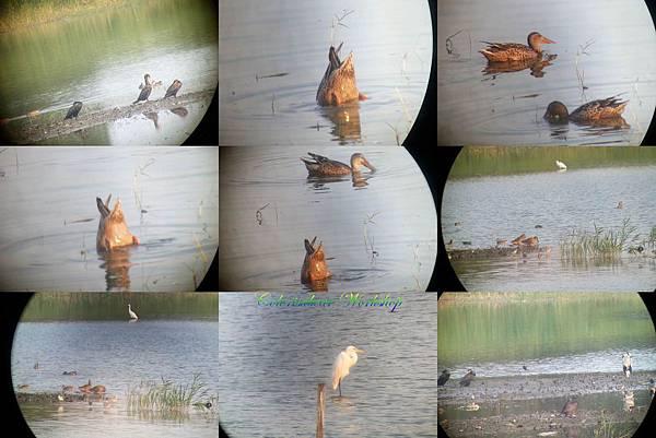 birds shot at HKWP.jpg