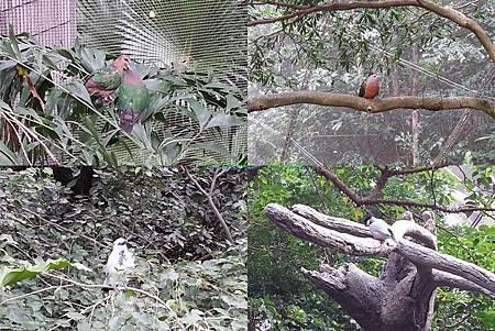 birds shots in the HK park.jpg