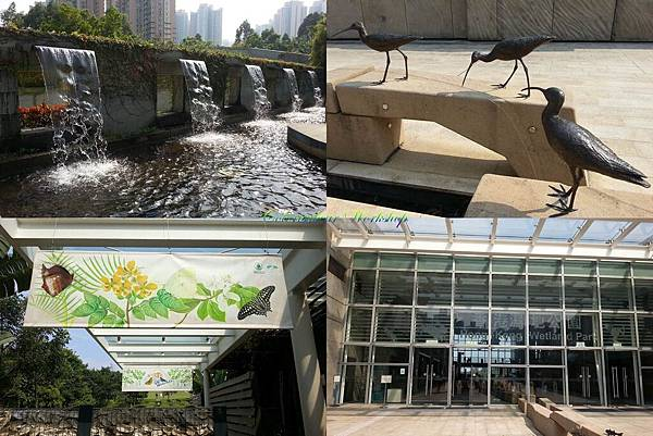 HK wetland Park 2013.jpg
