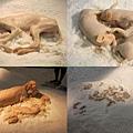Animals slept on their leather.jpg